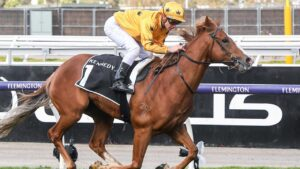 Gary Portelli saddles up Royalzel who will take on Anamoe in the Golden Rose at Rosehill Gardens on Saturday. Picture: Racing Photos via Getty Images