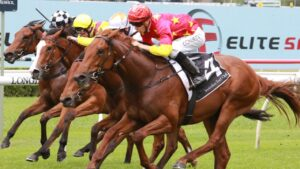 Tiger Of Malay can figure in the finish of the Golden Rose according to co-trainer Michael Freedman. Picture: Grant Guy