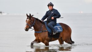 Zaaki has a Sunday morning recovery session at Altona Beach afer winning the Underwood Stakes. Picture: Vince Caligiuri–Getty Images