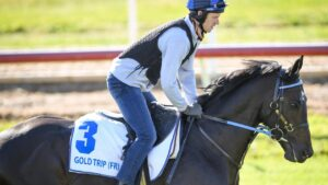Jumps jockey Lee Horner gives recently arrived import Gold Trip a look at his temporary home at Werribee on Tuesday. Picture: Racing Photos via Getty Images.
