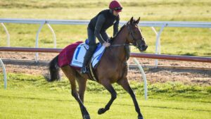 Track rider MJ Doran puts the Joseph O'Brien-trained State Of Rest through his paces at Werribee on Tuesday morning. Picture: Racing Photos via Getty Images