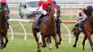 Jeffrey Maund drives Magnetic Edge clear at Morphettville. Picture: Atkins Photography