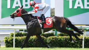 On Sunday they're racing at the Sunshine Coast - Corbould Park. Photo Patrick Woods/Sunshine Coast Daily.