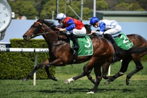 Hilal was too good for  Coastwatch in the Stan Fox Stakes and expecting the same on Saturday. Picture: Steve Hart.