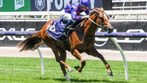 Brilliant sprinter Profiteer will have gear changes for Wednesday's Group 3 Blue Sapphire Stakes at Caulfield. Picture : Racing Photos via Getty Images.