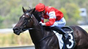 Let's Party Marty should be winning at Doomben on Wednesday.