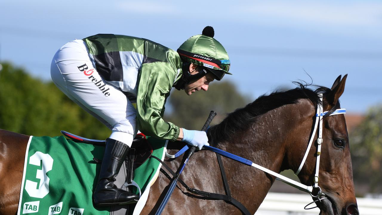 No surprises this bloke is the most highly favourite runner of the spring 'Big 4' by the News Corp racing team. Picture: Vince Caligiuri–Getty Images