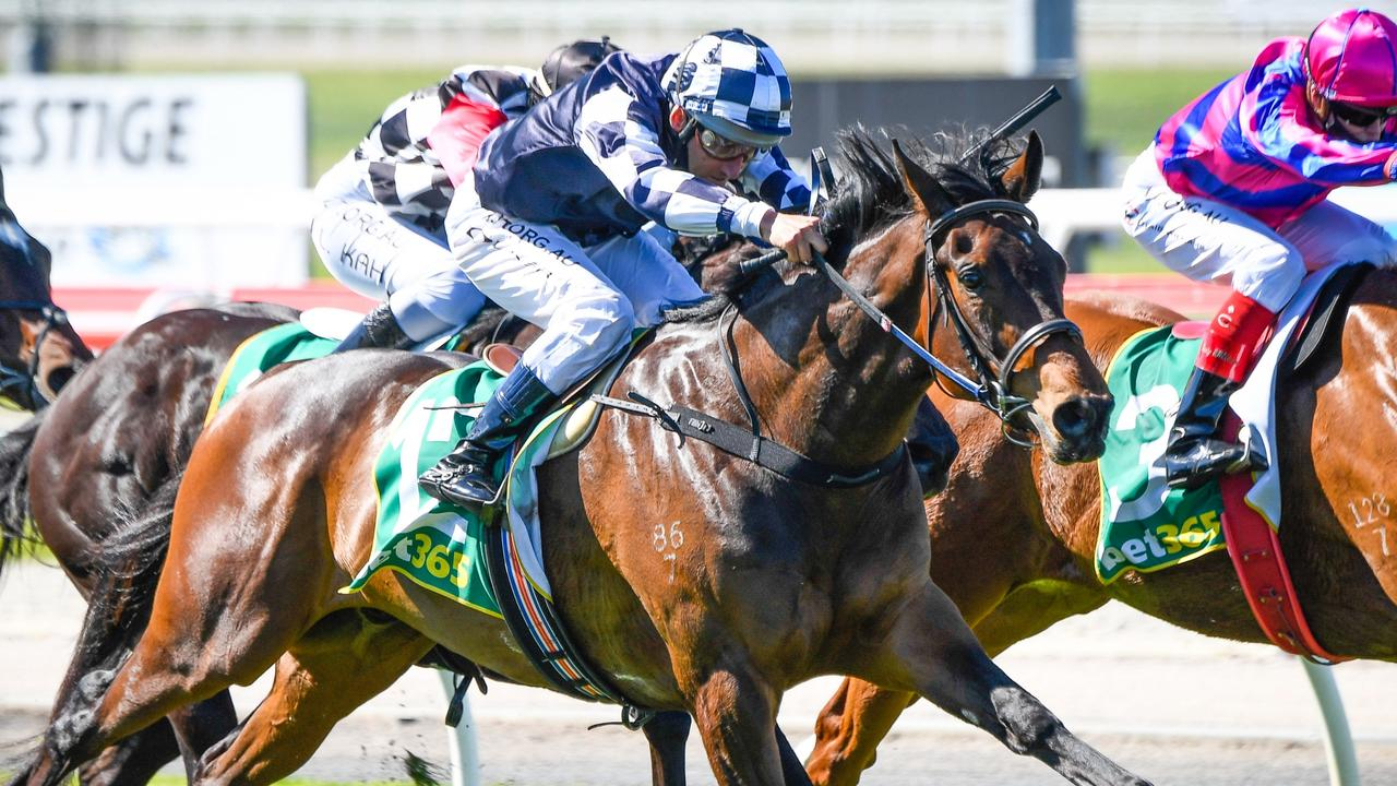 Young Werther is a winning chance in the Caulfield Cup despite having a only a Geelong maiden win to his name. Picture: Racing Photos