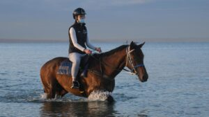 Explosive Jack, who was bought by Peter Moody, having a dip at Mordialloc Beach. Picture: Getty Images