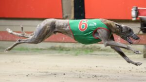 Bandit Ned is favourite for Saturday night's Group 1 Vic Peters Classic Source: Redden Video