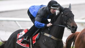 Damian Lane rode superstar mare Verry Elleegant in a Cox Plate preparation gallop at The Valley on Saturday. Picture: Getty Images.