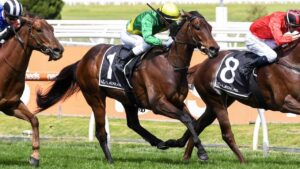 Savatoxl will line up in the Manikato Stakes. Photo: Reg Ryan/Racing Photos via Getty Images