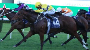Rocha Clock is ready to peak second-up in The Invitation at Randwick on Saturday. Picture: Grant Guy