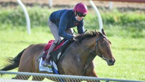 Pondus is primed to stamp Melbourne Cup credentials. Picture: Racing Photos
