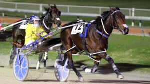 Bettor Twist will have her first Australian run in the 3YO Classic at Geelong. Picture: Harness Racing NZ