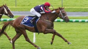 Dalasan is rated a $41 outsider for the Cox Plate. Picture: Atkins photography