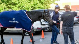 Gold Trip leaving Werribee racecourse following his scratching from the Cox Plate. Picture: Racing Photos via Getty Images