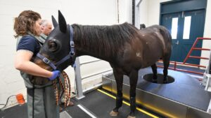 Standing CT scanner. Spike, with Dr Chris Witton and handler Carina Wickens. Picture: Pat Scala–Racing Photos