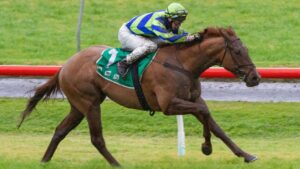 Beau Rossa could be aimed at the Winterbottom Stakes. Photo: Atkins Photography