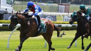 Rammstein can record a second win at Canterbury on Wednesday. Picture: Grant Guy