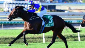 Dawn Passage will run in the Classique Legend Stakes. Picture: Trackside Photography