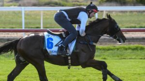 Sir Lucan strides out during his work at Werribee. Picture: Racing Photos via Getty Images