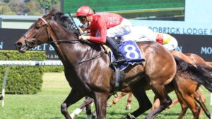 Peter Snowden rates Exoboom as the stable's best chance in the $7.5m Golden Eagle. Picture: Grant Guy